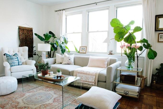 Cây xanh trang trí nội thất cho phòng khách